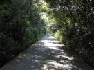 眼科医菰野保養施設への進入路自然林風景