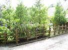 眼科医菰野保養施設本通り側植栽